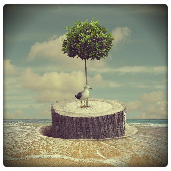Story of an Island of Hope (II)